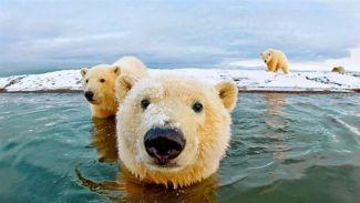 Buzullar her yıl 7 metre irtifa kaybediyor
