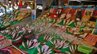 Karadeniz'de 161 balık türünden 59'u yok oldu!