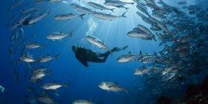 Okyanuslardaki canlı dengesi bozuldu
