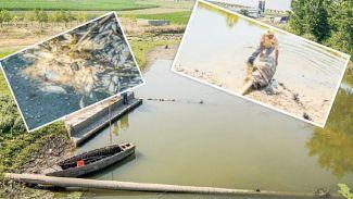 Kimyasal atıklar binlerce balığın ölümüne neden oluyor