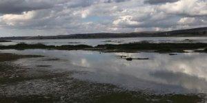 Ladik Gölü'nü kurtarma çalışmaları başladı