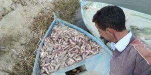 Beyşehirli balıkçılar kabus yaşıyor