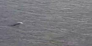 Kuşadası'nda Akdeniz foku görüldü