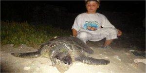 Deniz kaplumbağaları uydudan izlenecek