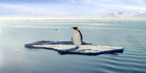 Yeni Zelanda'dan Avustralya'ya 2500 km yüzdü