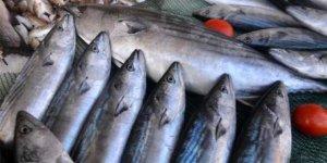Bazı dip balıkları beyni öldürüyor