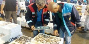İstanbul'da 173 ton balığa el konuldu