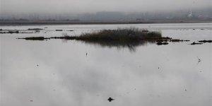 Ladik Gölü'nün yüzen adacıkları tehlikede!