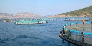 Antik tersaneye balık çiftliği kuruluyor