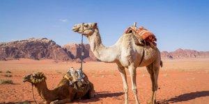 Bilim insanları: Dünya'nın dörtte biri çöl olabilir