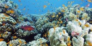 Mercan resiflerinin geleceği tehlikede