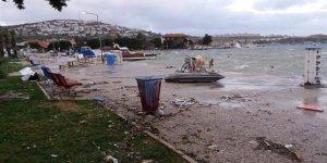 Fırtına deniz canlılarını da kıyıya savurdu