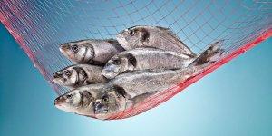 Turkish Cargo'dan Türk balıklarına özel sefer