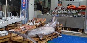 Marmara'da 2,5 metrelik kılıç balığı yakalandı