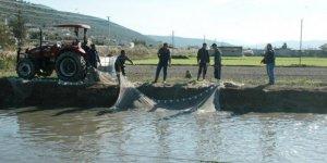 Tarla balıkçılığı köylülerin yüzünü güldürdü