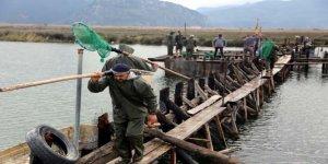 Dalyan Kanalı'nda 500 ton kefal üretiliyor