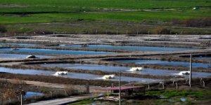 Adana'ya Su Ürünleri Organize Sanayi Bölgesi