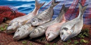 Amerika pazarında Türk balığına olan ilgi artıyor