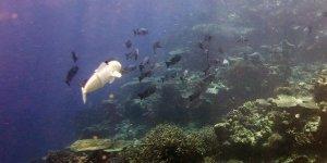 Robot balık göreve çıktı