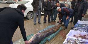 Balıkçının ağına dev yayın balığı takıldı