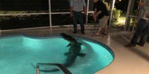 Yüzme havuzuna gizlice giren timsaha baskın