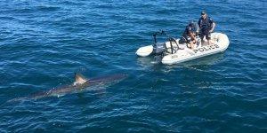 Deniz polisine köpek balığı engeli