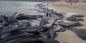 Yeni Zelanda sahilleri ölü balina çöplüğüne döndü