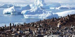Yaşam Dolu Antarktika Kıtasında Bir Yolculuk