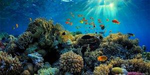 Mercanlar için teknolojik umut