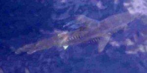 Turizm cennetinde köpekbalığı paniği