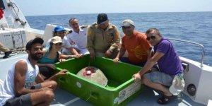 Tedavisi yapılan carettalar denize bırakıldı