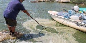Bafa Gölü'nde alg patlaması yaşanıyor