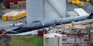 İzlanda'ya mavi balina avı suçlaması