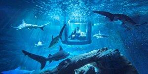 ABD'de hırsızlar köpek balığı çaldılar