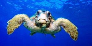 Otel projesine deniz kaplumbağaları engeli