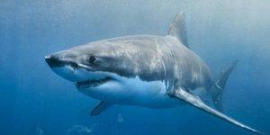 Köpekbalığının saldırdığı turist öldü