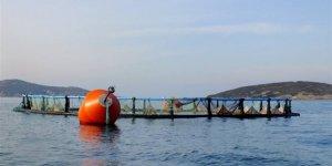 Bodrum'da yük gemisi balık çiftliğine çarptı