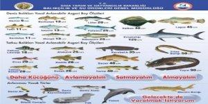 Bakanlık avlanabilir balık boylarını açıkladı