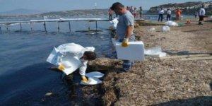 Foça sahilleri petrolden arınıyor