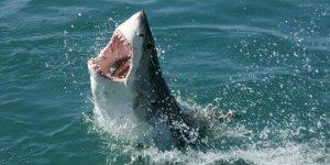 Ot yiyen köpekbalığı türü keşfetti!