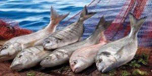 Türk balıkları Ortadoğu sofralarında