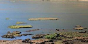 Çelikhan'da yüzen adaların sayısı 80'e çıktı