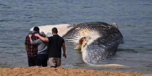 18 metre boyundaki dev balina kıyıya vurdu…