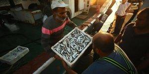 Karadeniz bu yıl balık fışkırıyor