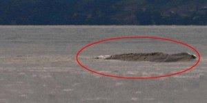 Kanada'nın Van Gölü Canavarı yine ortaya çıktı
