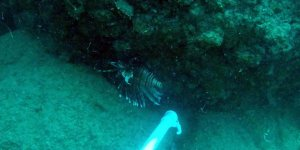 Antalya sahillerinin davetsiz konukları çoğaldı
