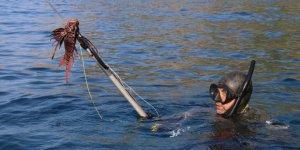 Zıpkıncılar, zehirli 'Aslan Balığı' için daldı