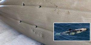 Köpek balığı saldırılarının ardı arkası kesilmiyor