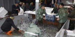 Zonguldak açıklarında 500 ton hamsi avlandı