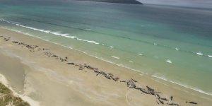 Kıyıya vuran 145 balina öldü